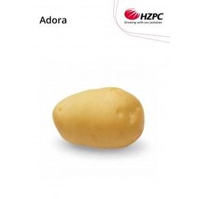 "KROMPIR ADORA ""A"" 35/50  5KG - AGROLIT"